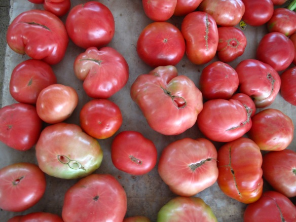 A 'real' Turkish tomato - Pembe Domates - grown, surprisingly enough - for flavour!